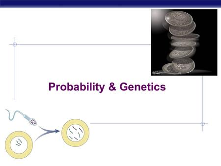 AP Biology Probability & Genetics AP Biology Probability & genetics  Calculating probability of making a specific gamete is just like calculating the.