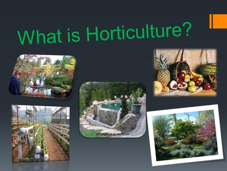 What is Horticulture?. Horticulture Horticulture is the art and science of growing fruits, nuts, vegetables, and ornamentals. Horticulture is also known.