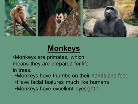 Monkeys Monkeys are primates, which means they are prepared for life in trees. Monkeys have thumbs on their hands and feet Have facial features much like.