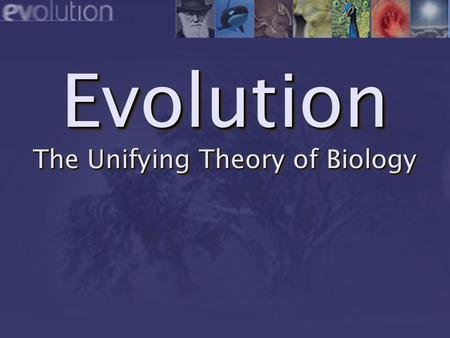 Evolution The Unifying Theory of Biology. 21222324252627282930 11121314151617181920 Contemporary Scientific History of the Universe 12345678910 13.7 billion.