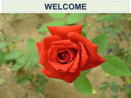 WELCOME. UMME SALEHA HEAD TEACHER KORAMDOSHI GOVT. PRIMARY SCHOOL BAGATIPARA, NATORE.