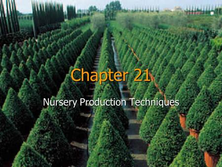 Nursery Production Techniques
