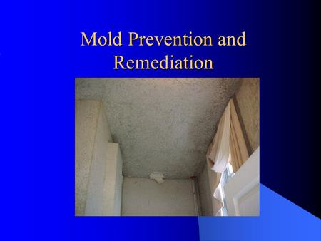 Mold Prevention and Remediation. Agenda How Does Mold Exposure Occur? Requirements for Mold Growth Health Effects Associated with Mold Exposure Objective.