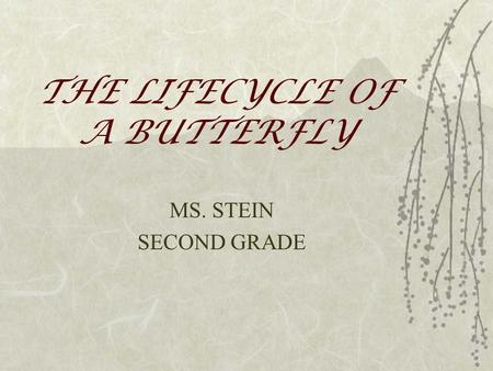 THE LIFECYCLE OF A BUTTERFLY MS. STEIN SECOND GRADE.