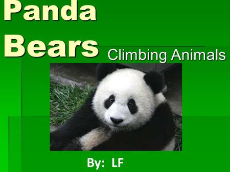 Panda Bears Climbing Animals Climbing Animals By: LF.