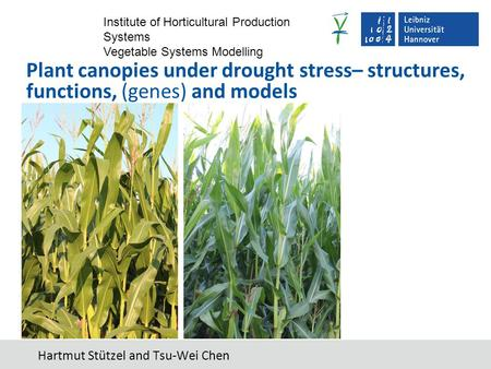 Institute of Horticultural Production Systems Vegetable Systems Modelling Hartmut Stützel and Tsu-Wei Chen Plant canopies under drought stress– structures,