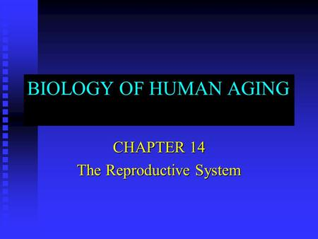 CHAPTER 14 The Reproductive System