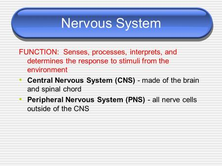 Nervous System FUNCTION: Senses, processes, interprets, and determines the response to stimuli from the environment Central Nervous System (CNS) - made.