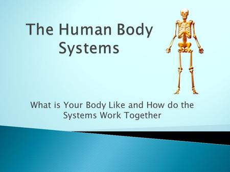 What is Your Body Like and How do the Systems Work Together