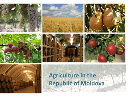 Agriculture in the Republic of Moldova. Overview Impact on economic growth – 38% Agricultural lands – 2498,0 thousands ha (73,8%) including: including: