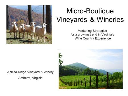 Micro-Boutique Vineyards & Wineries Marketing Strategies for a growing trend in Virginia's Wine Country Experience Ankida Ridge Vineyard & Winery Amherst,