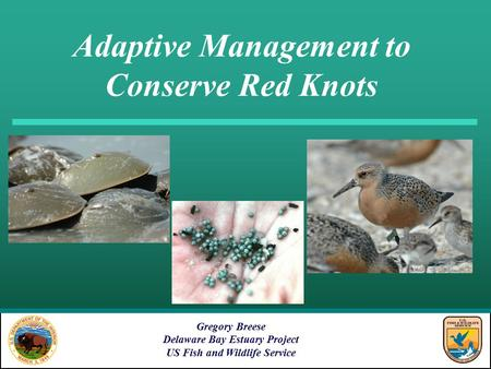 Adaptive Management to Conserve Red Knots Gregory Breese Delaware Bay Estuary Project US Fish and Wildlife Service.