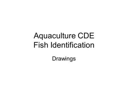 Aquaculture CDE Fish Identification Drawings. Large Mouth Bass Micropterus salmoides.