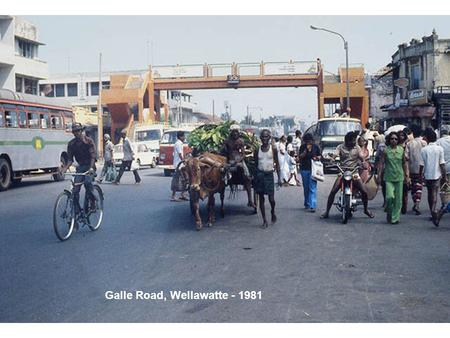 Galle Road, Wellawatte - 1981. Crab Vendor – Can you tell the sex of each crab?