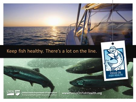 Keep fish healthy. There's a lot on the line. www.FocusOnFishHealth.org.