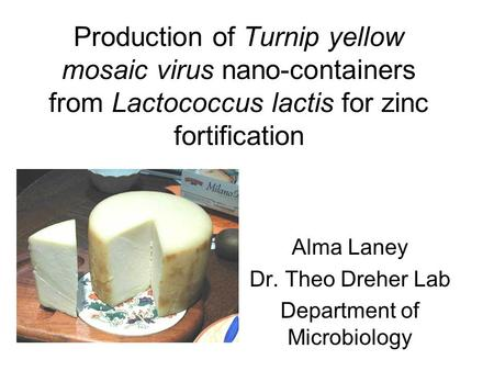 Production of Turnip yellow mosaic virus nano-containers from Lactococcus lactis for zinc fortification Alma Laney Dr. Theo Dreher Lab Department of Microbiology.