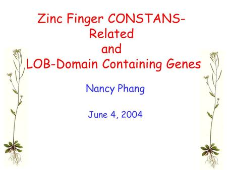 Zinc Finger CONSTANS- Related and LOB-Domain Containing Genes Nancy Phang June 4, 2004.