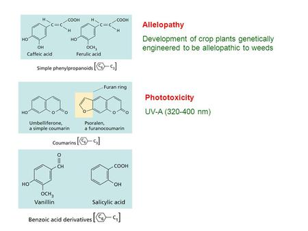 Allelopathy Development of crop plants genetically engineered to be allelopathic to weeds Phototoxicity UV-A (320-400 nm)