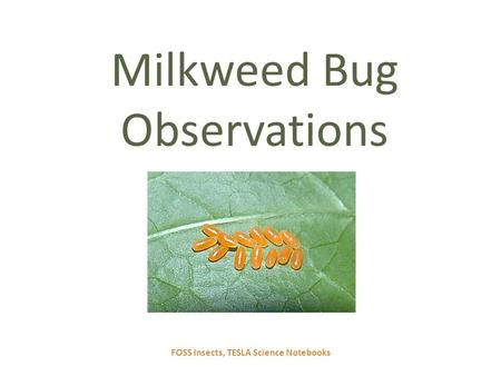 FOSS Insects, TESLA Science Notebooks Milkweed Bug Observations.