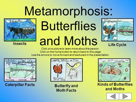 Metamorphosis: Butterflies and Moths Click on a picture to learn more about the person. Click on the home button to return back to this page. Use the.