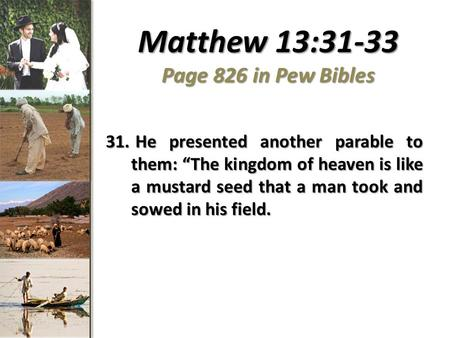 "Matthew 13:31-33 Page 826 in Pew Bibles 31. He presented another parable to them: ""The kingdom of heaven is like a mustard seed that a man took and sowed."