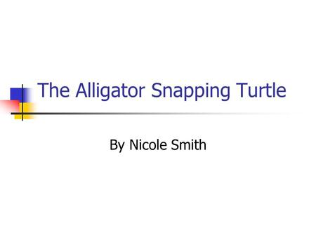 The Alligator Snapping Turtle By Nicole Smith. Alligator Snapping Turtle The Alligator Snapping Turtle can weigh up to 200 pounds or more. It is the worlds.