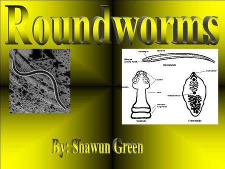 Roundworms are Parasites or Larva Migrans they are common in a number of different animal species including dogs and cats. Roundworm specific to humans.