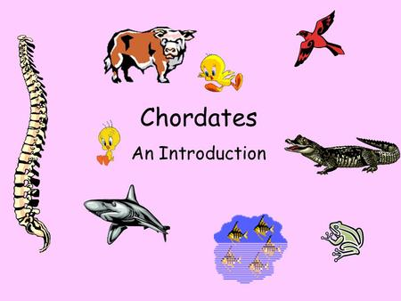 Nonvertebrate Chordates Fishes And Amphibians What Is A Chordate