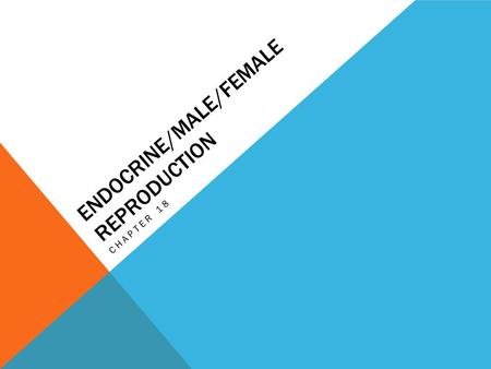Endocrine/Male/Female Reproduction