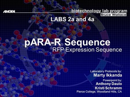 pARA-R Sequence LABS 2a and 4a RFP Expression Sequence