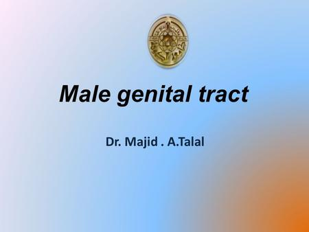 Male genital tract Dr. Majid. A.Talal. * Male reproductive system consist of: 1- scrotum 2- Testes & epididymis 3- Spermatic cord 4- deferent duct 5-
