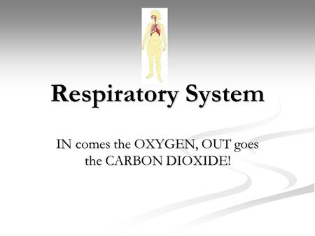 Respiratory System IN comes the OXYGEN, OUT goes the CARBON DIOXIDE!