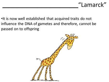 "_______________________""Lamarck"" It is now well established that acquired traits do not influence the DNA of gametes and therefore, cannot be passed on."