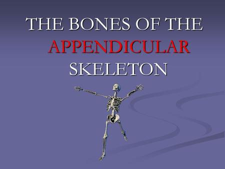 THE BONES OF THE APPENDICULAR SKELETON