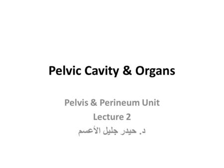 Pelvis & Perineum Unit Lecture 2 د. حيدر جليل الأعسم