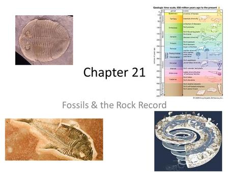 Fossils & the Rock Record