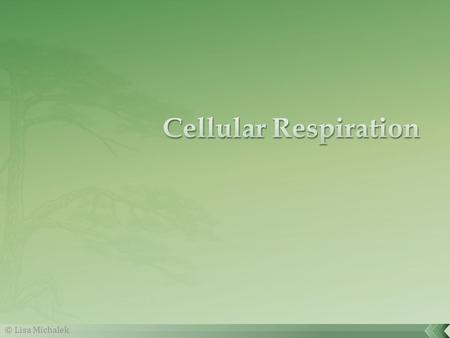 Cellular Respiration © Lisa Michalek.