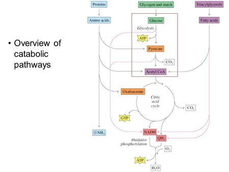Overview of catabolic pathways