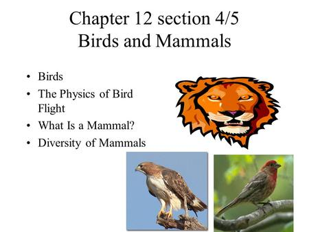 Chapter 12 section 4/5 Birds and Mammals Birds The Physics of Bird Flight What Is a Mammal? Diversity of Mammals.