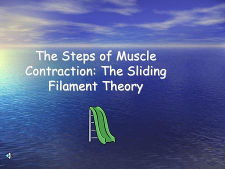 The Steps of Muscle Contraction: The Sliding Filament Theory