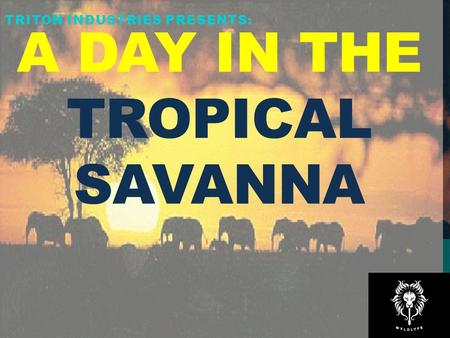 A Day in the Tropical Savanna