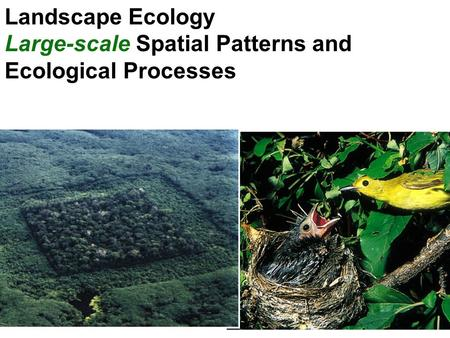 Landscape Ecology Large-scale Spatial Patterns and Ecological Processes.