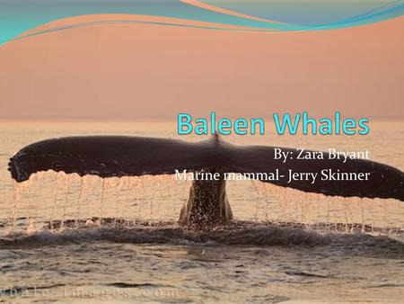 By: Zara Bryant Marine mammal- Jerry Skinner. Types: different species Minke Whale Bryde's Whale Sei Whale Fin Whale Blue Whale Humpback Whale Pygmy Whale.