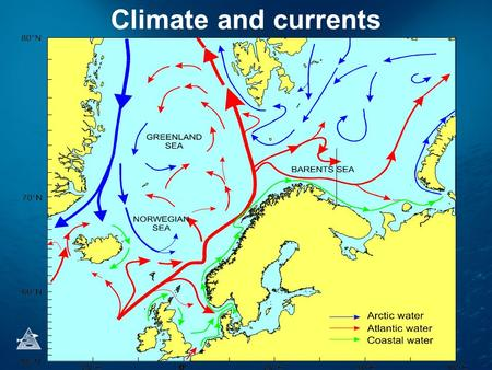 Climate and currents. Temperature in Kola section.