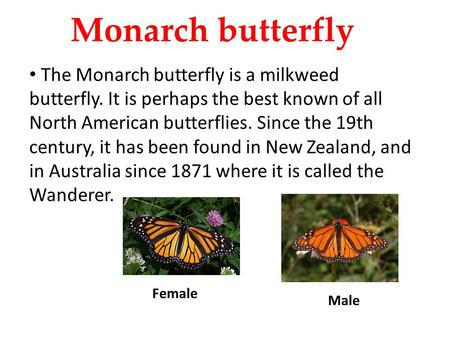 Monarch butterfly The Monarch butterfly is a milkweed butterfly. It is perhaps the best known of all North American butterflies. Since the 19th century,