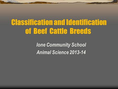 Ione Community School Animal Science 2013-14 Classification and Identification of Beef Cattle Breeds.