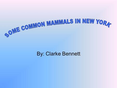 By: Clarke Bennett. Table of Contents 3- Little Brown Bat 4- American Beaver 5- Eastern Cottontail Rabbits 6- Eastern Gray Squirrel 7- North Eastern Coyote.