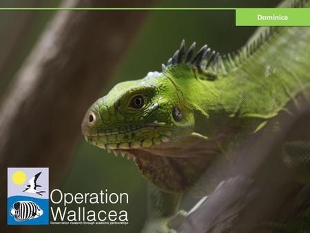Dominica. What is Operation Wallacea? Tropical scientific expeditions in 15countries 200+ academics running more than 120 projects Results published in.