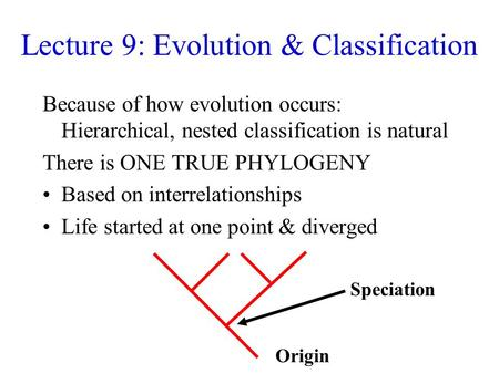 Lecture 9: Evolution & Classification Because of how evolution occurs: Hierarchical, nested classification is natural There is ONE TRUE PHYLOGENY Based.