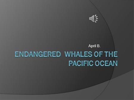 April B. Which whales are endangered in the Pacific Ocean?  The Blue whale  The Humpback Whale  The Gray Whale.